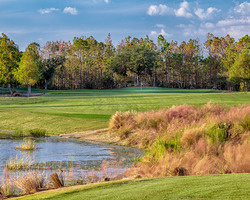 Golf Vacation Package - Tiburon Golf Club - The Black Course